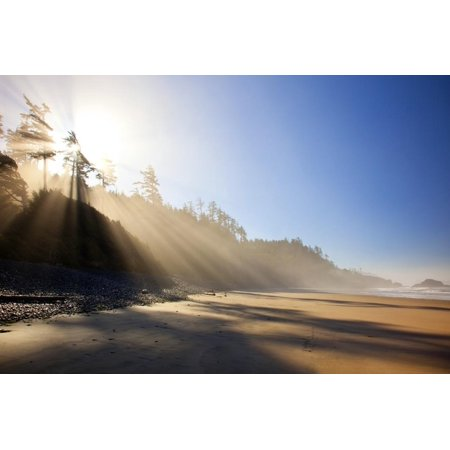 Sunrise over Trees Along Indian Beach, Oregon Coast, Pacific Northwest. Pacific Ocean Print Wall Art By Craig (Best Fruit Trees For Pacific Northwest)