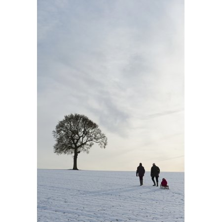 Couple Pulling Child On Sledge Up Hill Covered In Snow Towards Solitary Oak TreePetersfield Hants Uk Stretched Canvas - Ian Cumming  Design Pics (12 x 19) for $<!---->