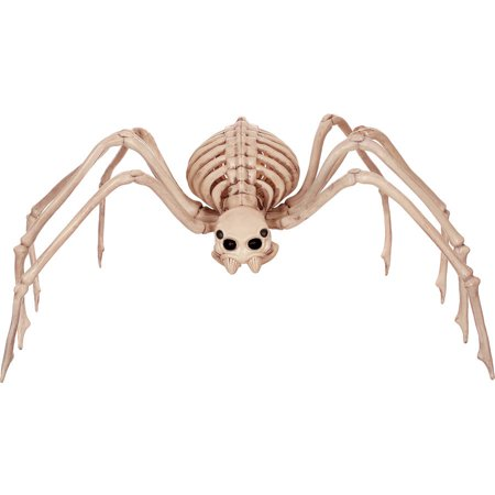 Skeleton Spider - Parrot Skeleton