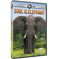 Nature: Soul of the Elephant (DVD)