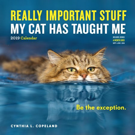 Really Important Stuff My Cat Has Taught Me Wall Calendar 2019 (Other)