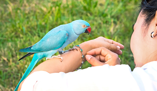 Bird Grooming & Cleanliness