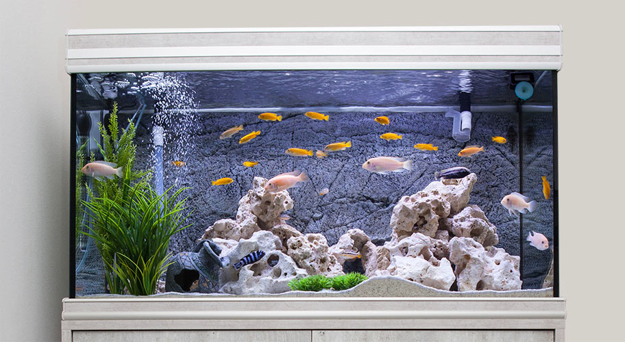 Luxury for Less. Go swanky when it comes to where your fish swim with top-quality tanks at low prices.
