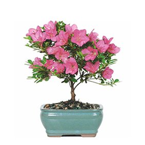 Plants, Flowers & Trees