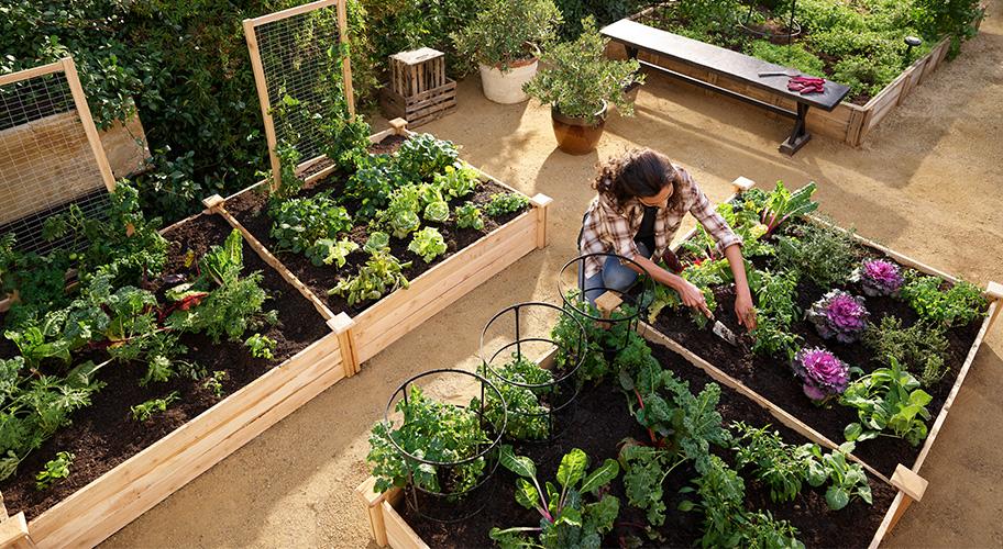 Fine Garden Center Walmart Com Beutiful Home Inspiration Xortanetmahrainfo