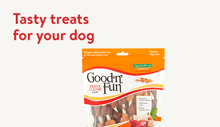 Shop tasty treats for your dog