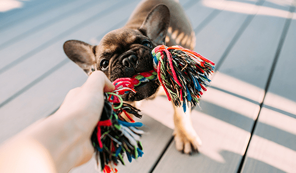 Choosing the Right Dog Toys