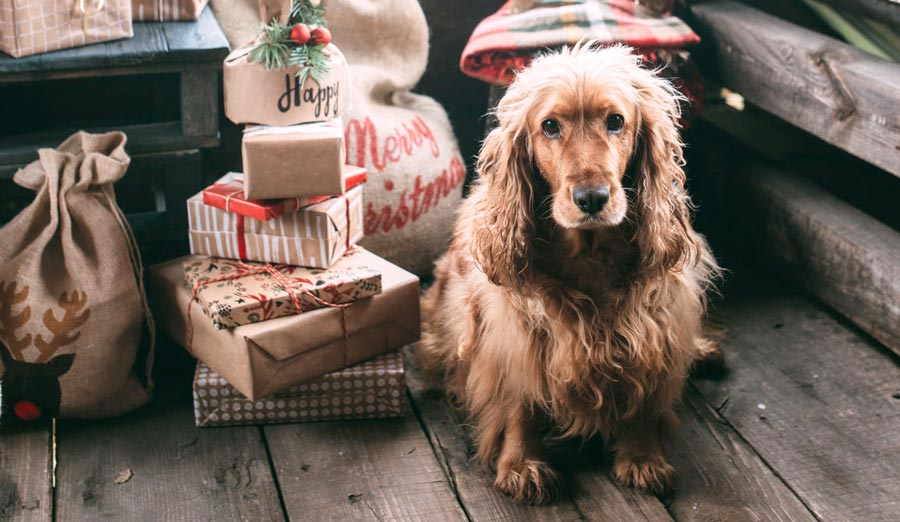 Dog Gift Guide: Proper Presents by Puppy Personality