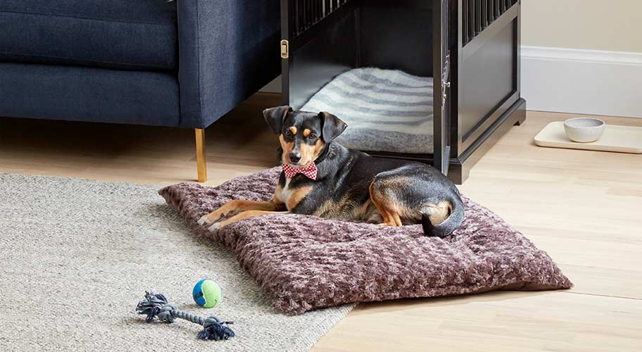Dogs walmart find all the makings of a stylish dog friendly home that solutioingenieria Choice Image
