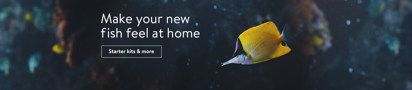 Make your new fish feel at home.
