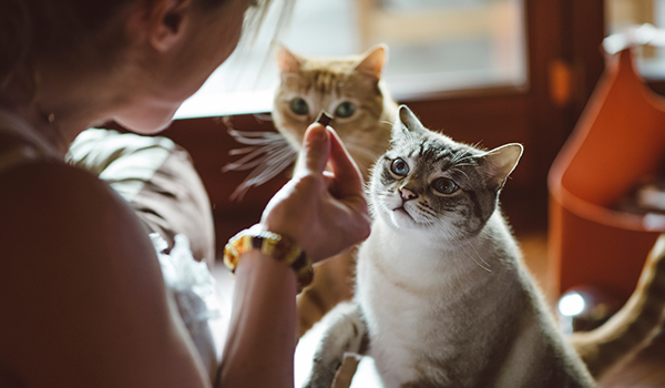 Facts about feeding cats