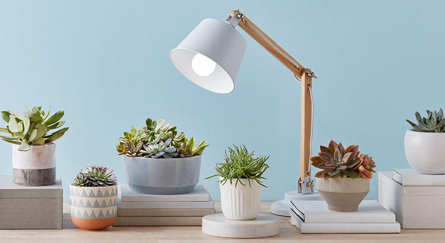 Give The Green Light Grow Your Plants Succulents With Lighting Solutions Designed For Indoor