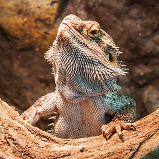 Reptile Terrariums - Reptile Tanks & Habitats - Walmart com