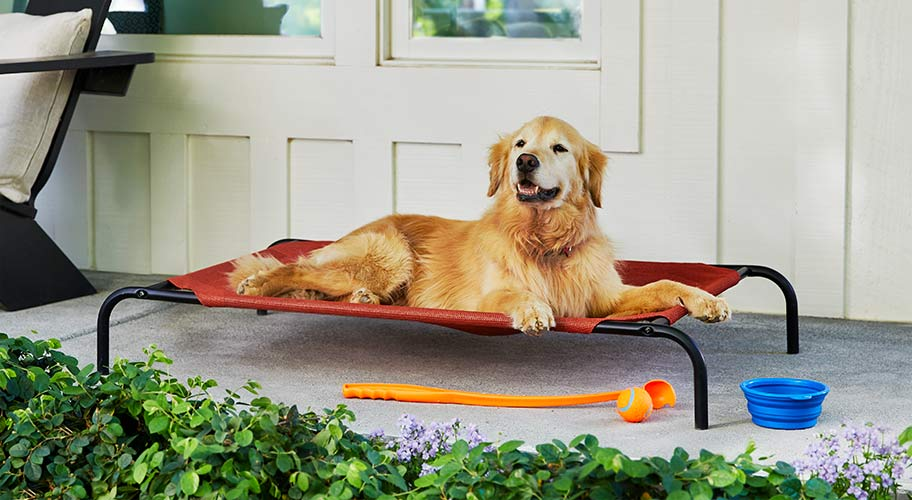 Your dog's days of summer. Save on ways to keep your canine comfy in your backyard & beyond.