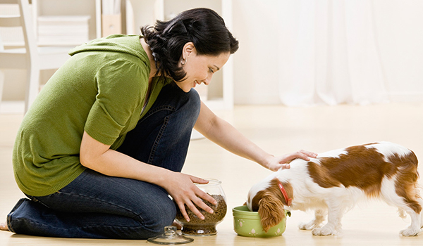 Dog eating while owner pets dog
