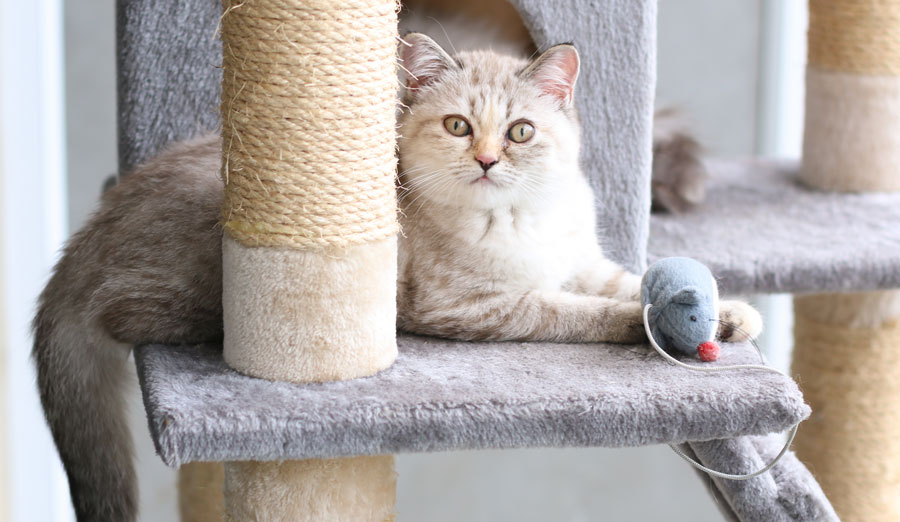 New Cat & Kitten Supplies Checklist