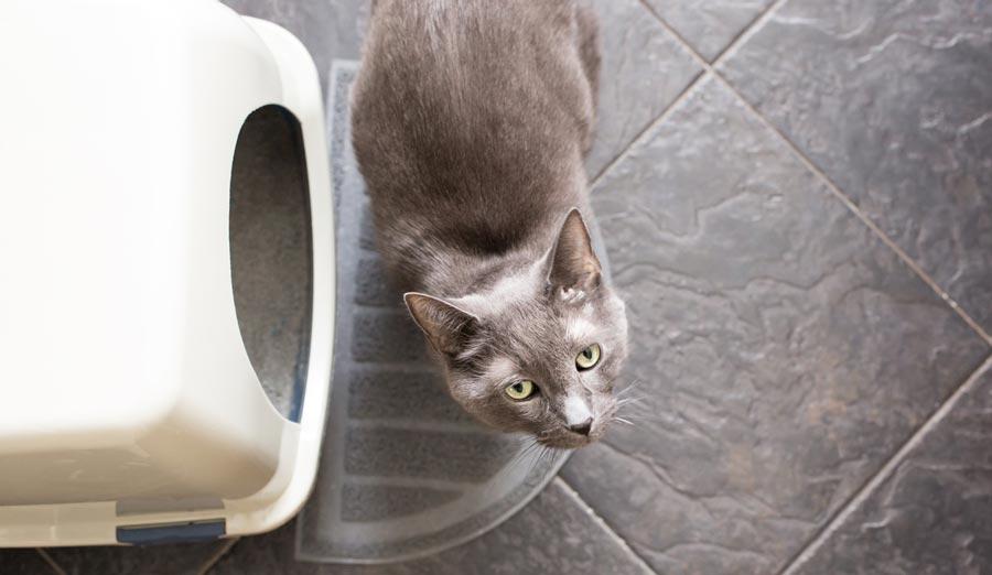 Small Space Hidden Litter Box Solutions for Cat Parents - Walmart.com