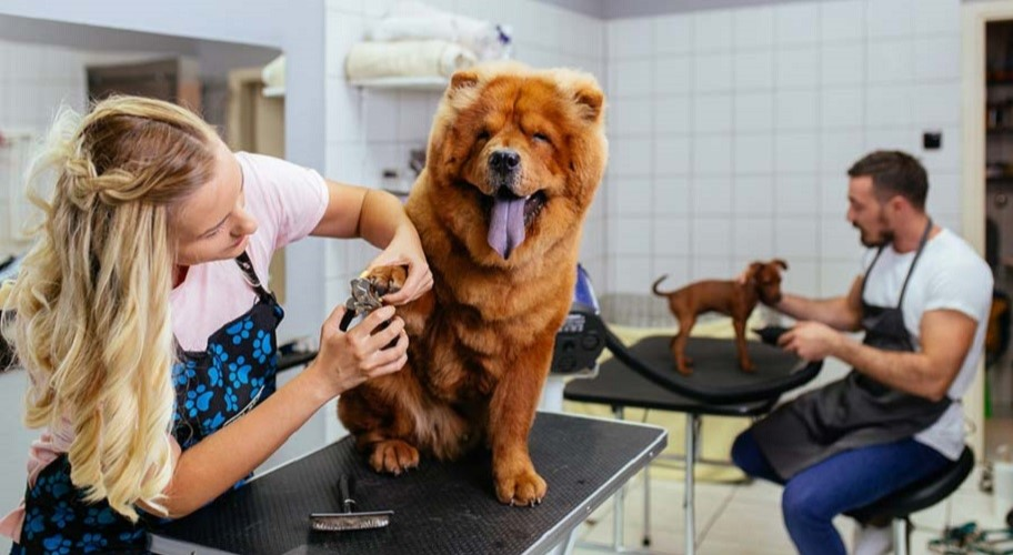What You Need to Be A Professional Dog Groomer