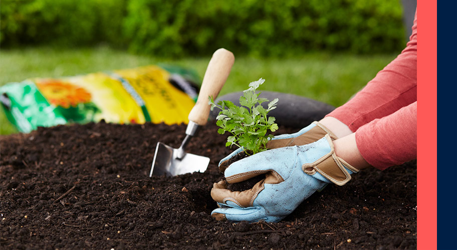what do you need to beautify your garden find it - Garden Soil