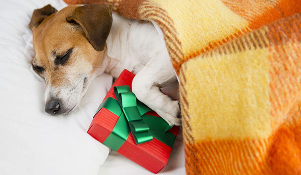10 Great Christmas Gifts for Pet Owners