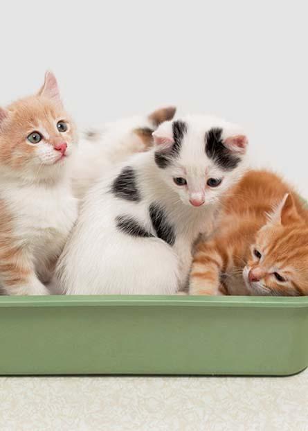 91f1f3699c Cat Supplies - Walmart.com