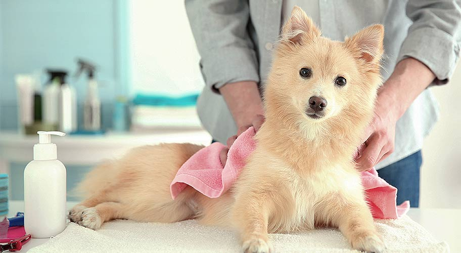 Supplies For Professional Groomers Dog Owners Alike