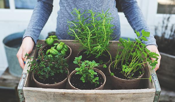 Grow Your Own 3 Easy Herb Vegetable Garden Ideas