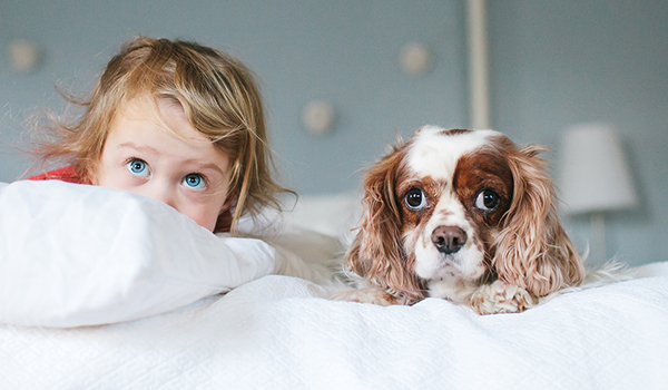 3 Questions to ask Before Choosing a Pet