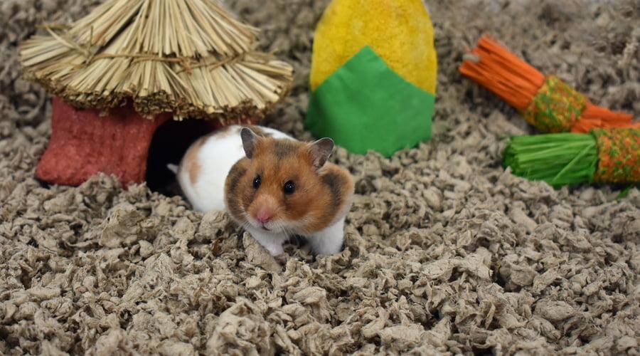 Small Animals and Supplies - Walmart com