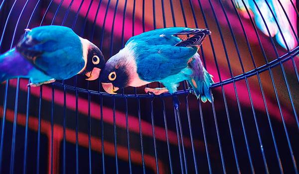 Pet Bird Buying Guide