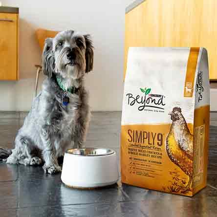 Dog Food & Treats