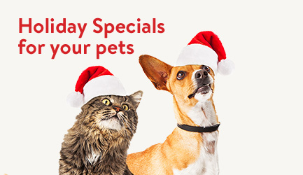 Holiday Specials for your pets