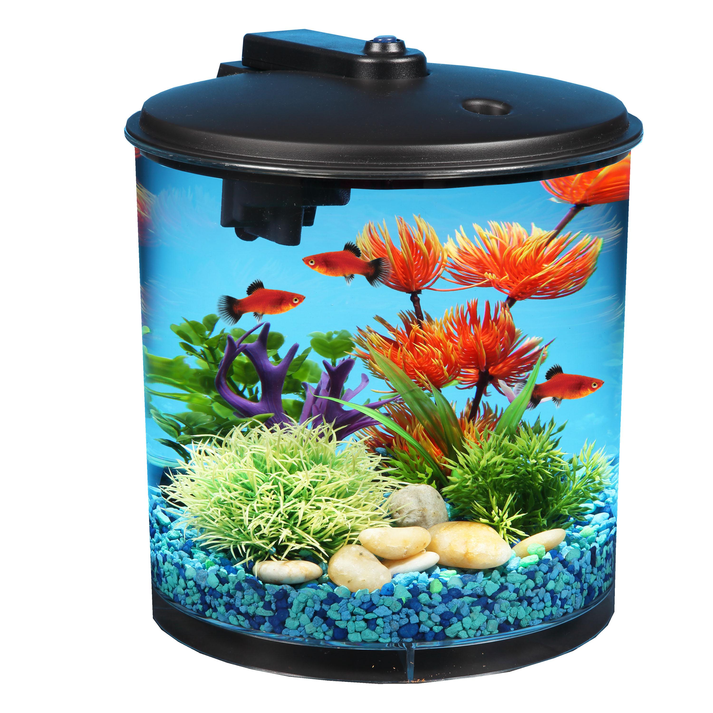 Types of home aquarium freshwater fish - Walmart.com