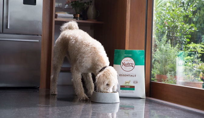 5 Things To Look For In Quality Pet Food Walmart Com