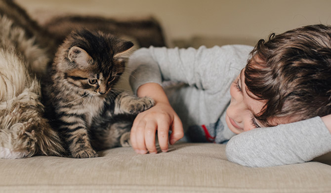 Children & Cats: Tips for Bringing Home a New Feline Friend