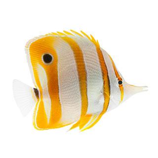 walmart pet fish types