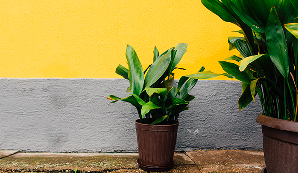Easy care plants - Easy maintenance house plants ...