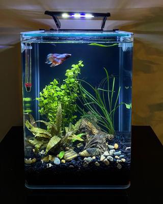 Marineland Portrait Glass Led Aquarium Kit 5 Gallons Hidden Filtration Walmart Com Walmart Com