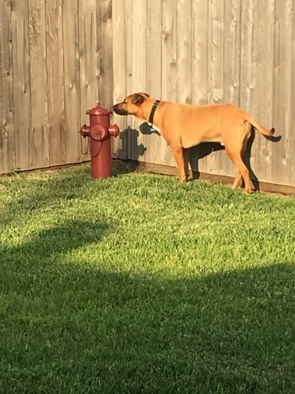 Design Toscano Fire Hydrant Statue Puppy Pee Post And Pet Storage Container Large 23 Inch Metalware Full Color Walmart Com Walmart Com