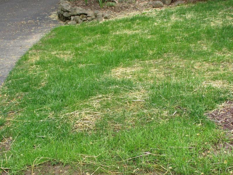 15,000 sq. ft. coverage Pennington 29-0-5 Lawn Fertilizer 46 Lbs.