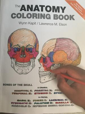 The Anatomy Coloring Book (Paperback) - Walmart.com