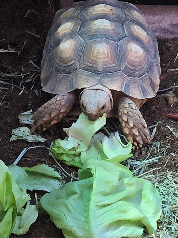 Purina Mills Mazuri Tortoise Diet 25 lb