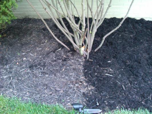 Scotts Nature Scapes Color Enhanced Mulch Clic Black 2 Cu Ft