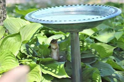 Large Lady Garden Ceramic Ornament Figure antique White Bird feed bath