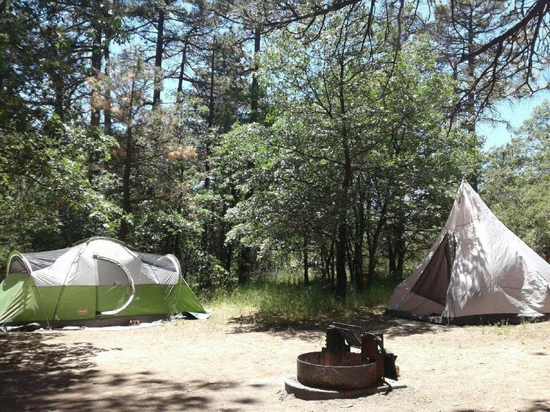 & Coleman Montana 8-Person Tent Green - Walmart.com