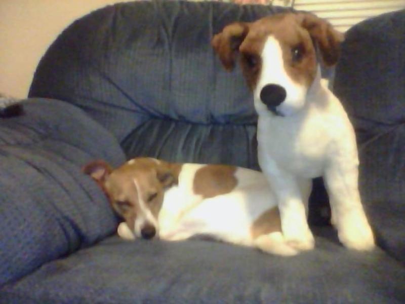 Lifelike Stuffed Animal Dog Melissa & Doug Giant Jack