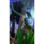 Tetra Submersible Aquarium Tank Heater 2 15 Gallon 50