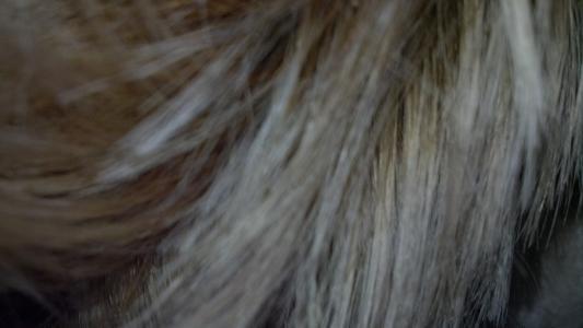 John Frieda Sheer Blonde Colour Renew Tone Correcting Shampoo 8 45 Oz Walmart Com Walmart Com