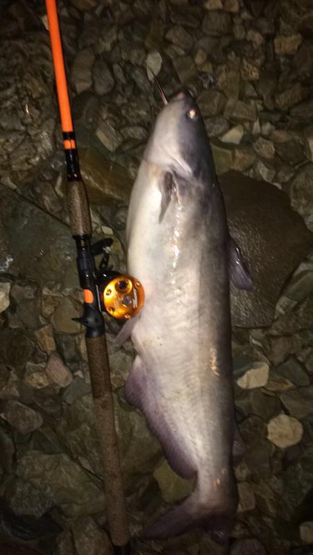 Abu Garcia Ambassadeur Catfish Round Special6500